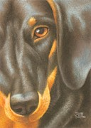 Puppy Pastels - Goggie Daschund by Karen Coombes