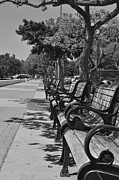 Park Benches Photos - Going for a Walk by Robert Martin