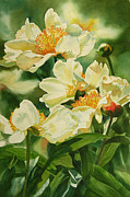 White Blossoms Paintings - Gold and White Peonies by Sharon Freeman