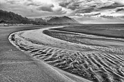 Jamie Pham - Gold Bluffs Beach is located in the Prairie Creek Redwoods State in Black and White.