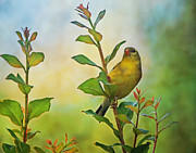 Tree Creature Prints - Gold Finch on Branch Print by Sandy Keeton