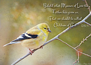 Gold Finch On Twig With Verse Print by Debbie Portwood