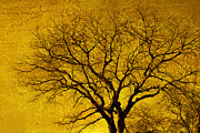 Tree Art Digital Art - Golden  by Ann Powell