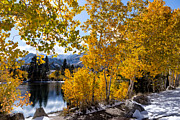 Turning Leaves Digital Art Framed Prints - Golden Aspen on the Lake Framed Print by Kathleen Bishop