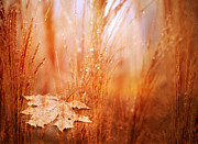 Claudia Burlager - Golden Autumn
