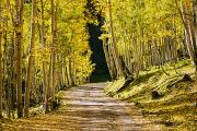 Featured Art - Golden Autumn Path by Quincy Dein