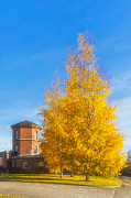 Office Decor Photos - Golden Autumn by Veikko Suikkanen