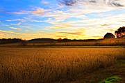 Randall Branham - golden beans goldnblue sunset