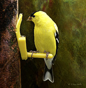 Backyard Goldfinch Digital Art Posters - Golden Beauty Poster by J Larry Walker