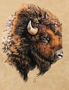 Indian Pastels Posters - Golden Bison Poster by Debra Jones