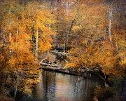 Autumn Landscape Photo Framed Prints - Golden Blessings Framed Print by Jai Johnson