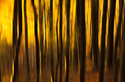 Horizontal Abstract Landscape Prints - Golden Blur Print by Anne Gilbert