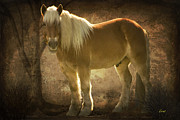 Horse Greeting Cards Prints - Golden Boy Print by George Lenz