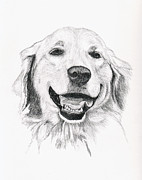 Dogs Drawings - Golden by Brandy House