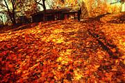 Jenny Rainbow - Golden Carpet of Fall