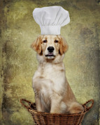 Golden Chef Print by Susan Candelario