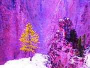 Ann Johndro-Collins - Golden Christmas in...