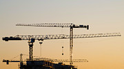Tower Crane Posters - Golden Cranes Poster by Wim Lanclus