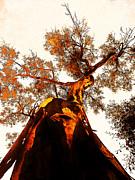 Juan Jose Espinoza - Golden Ballerina Tree