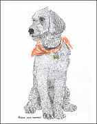 Retrievers Drawings - Golden Doddle talking trash by Jack Pumphrey