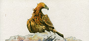 Nature Study Painting Posters - Golden Eagle Aquila chrysaetos Poster by Juan  Bosco