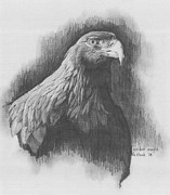 Drawing Of Eagle Drawings - Golden Eagle by Kenneth Stock