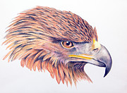 Mary Mayes Framed Prints - Golden Eagle Framed Print by Mary Mayes