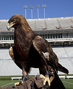 Alabama Campus Prints - Golden Eagle of Auburn University Print by Carol M Highsmith