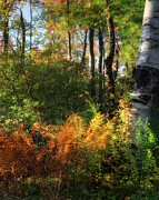 Autumn In New England Prints - Golden Fern Print by Bill  Wakeley
