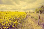 Bonnie Bruno - Golden Field