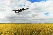 Lancaster Bomber Digital Art - Golden Fields by James Biggadike
