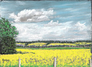 Golden Fields Of Alberta Print by Fiona Graham