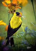Cris Hayes Art - Golden Floral Finch by Cris Hayes