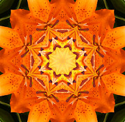 Turning Leaves Digital Art Prints - Golden Flower - Abstract - Kaleidoscope2 Print by Barbara Griffin