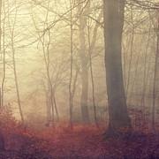 Golden Fog Print by Dirk Wuestenhagen