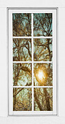 Picture Window Frame Photos Art - Golden Forest  Branches White 8 Windowpane View by James Bo Insogna