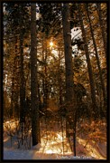 Michaela Preston Framed Prints - Golden Forrest Framed Print by Michaela Preston