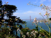San Francisco Bay Prints - Golden Gate Bridge and Wildflowers Print by Carol Groenen