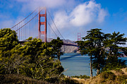 Sausalito Art - Golden Gate Bridge by Mark Llewellyn