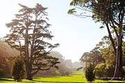 Golden Gate Park San Francisco Print by Artist and Photographer Laura Wrede