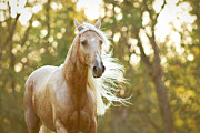 Paso Fino Horse Photos - Golden Girl by Stephanie Moon