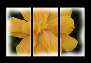 Floral Design Photos - Golden Girl Triptych by Cheryl Young