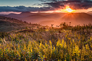Knob Prints - Golden Glory Print by Rob Travis