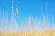 Minimal Landscape Digital Art - Golden Grasses on a Sunny Day by Natalie Kinnear