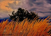 Rick Todaro - Golden Grasses