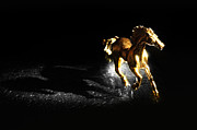 William Voon - Golden Horse