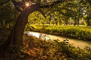 Jenny Rainbow - Golden Hour in Rhoon. Holland