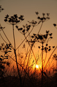 Paul Lilley Metal Prints - Golden Hour Metal Print by Paul Lilley