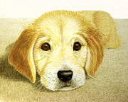 Puppy Drawings - Golden Lab Pup by Jacqueline Barden