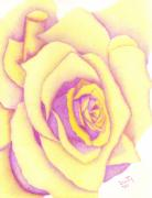 Lavender Drawings - Golden Lavender Rose by Dusty Reed